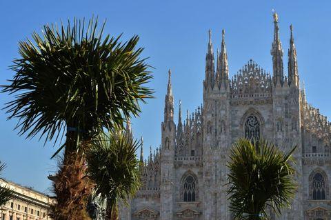 Addio alle palme in Duomo?