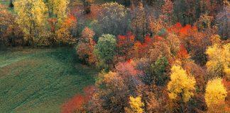 boschi lombardi