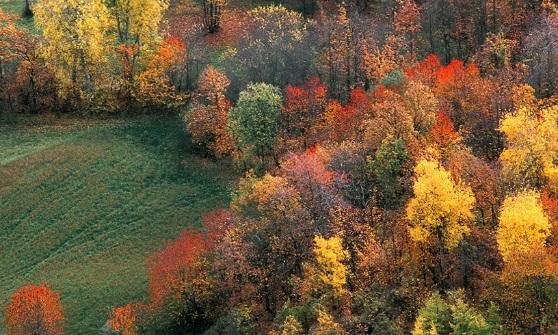 Tempo di foliage: i colori dell'autunno nei boschi lombardi