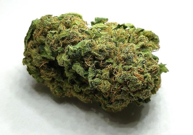 Cannabis shop: è vero stop?