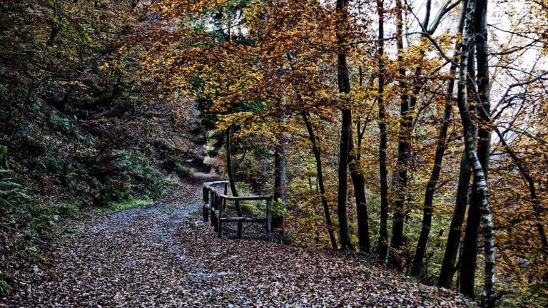 """Torna la """"regina dell'autunno"""", i luoghi migliori per la caccia alle castagne"""