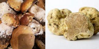 funghi e tartufi