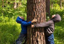 ogni albero