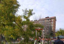 Una giornata di vero e proprio giardinaggio urbano