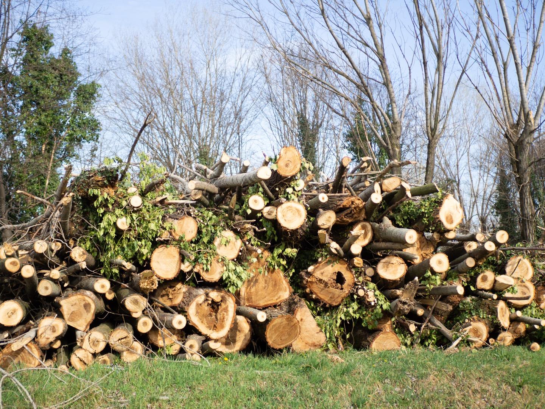Municipio 9 - taglio degli alberi in piena emergenza coronavirus