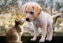 coronavirus e animali domestici