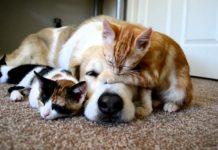 Cani e gatti, come tutelarli in Fase 2 tra vecchie e nuove abitudini