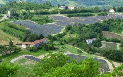 Lavanda - Alto Monferrato