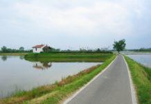 Il Parco delle Risaie, il presidente Castellanza: «Un'oasi che produce 55mila piatti di riso al giorno»
