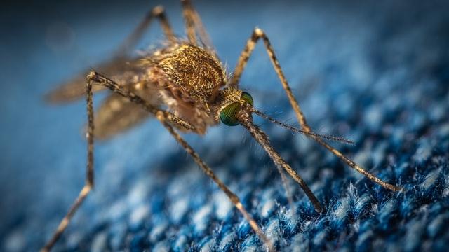 Boom di zanzare in Lombardia: sono aumentate del 27%