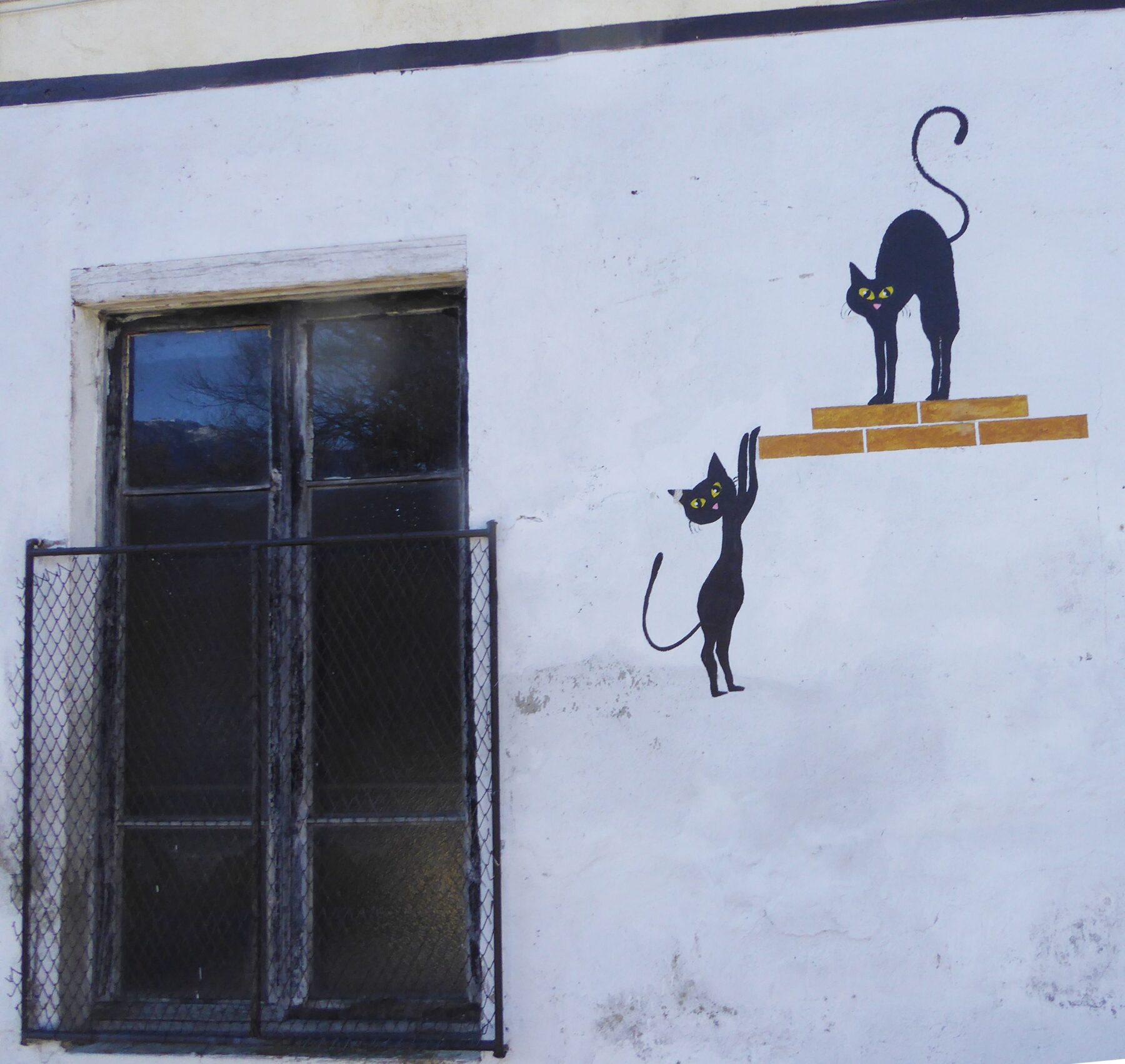 nonio - paese dei gatti