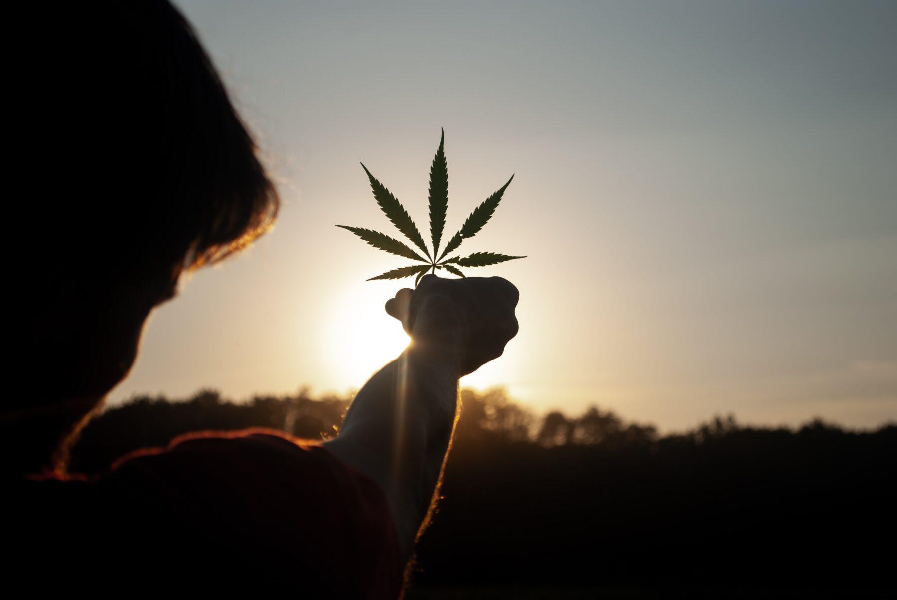 cannabis social club milano